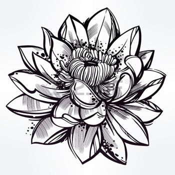 350x350 Tatouage Fleur Vector Set Of Hand Drawn Fleur De Lotus. Lily