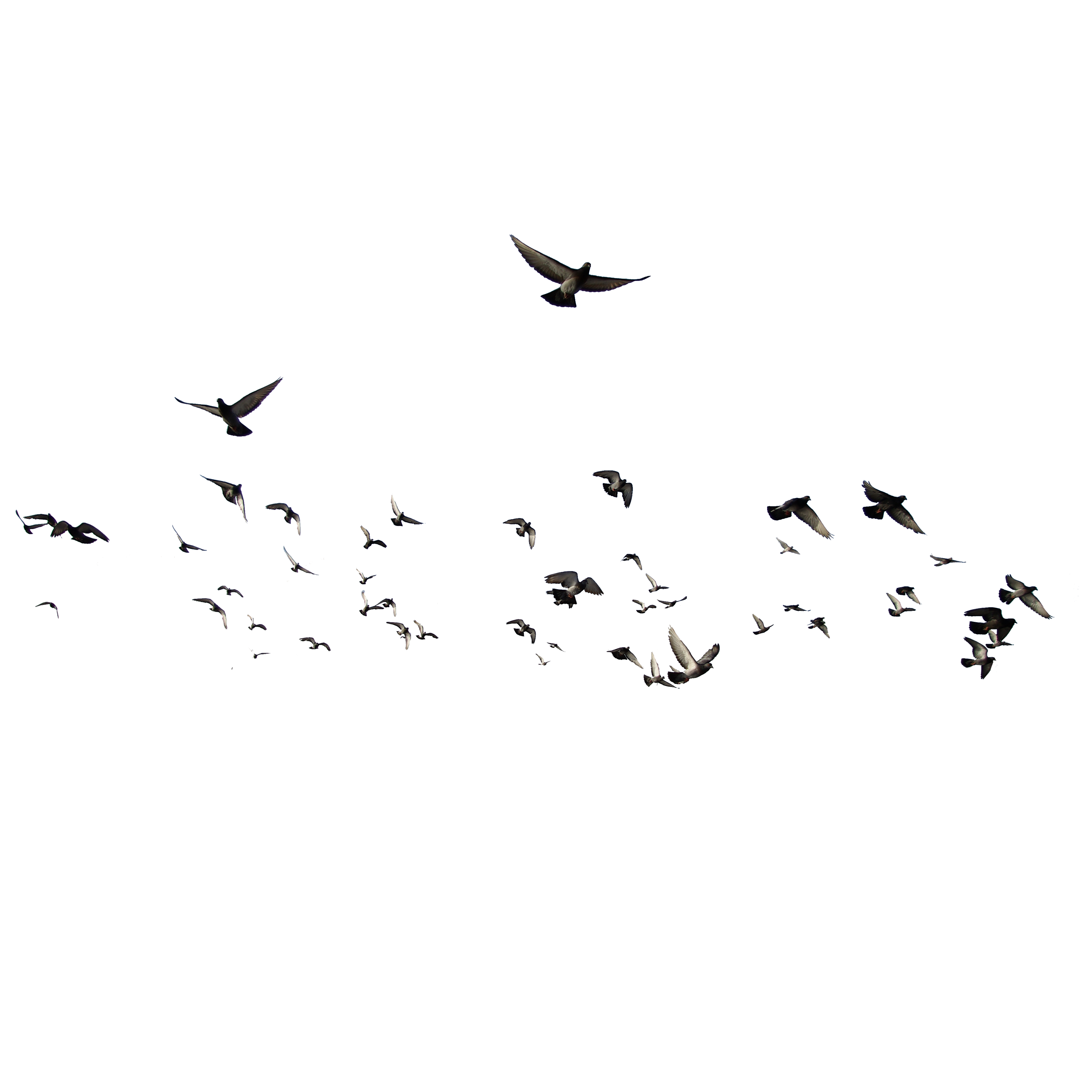 3500x3500 Collection Of Free Birds Vector Bird Flock. Download On Ubisafe
