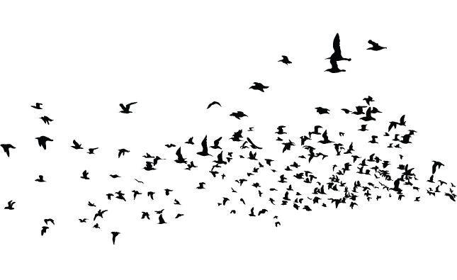 645x395 Flock Of Birds Vector Pack Birds, Updated Bird