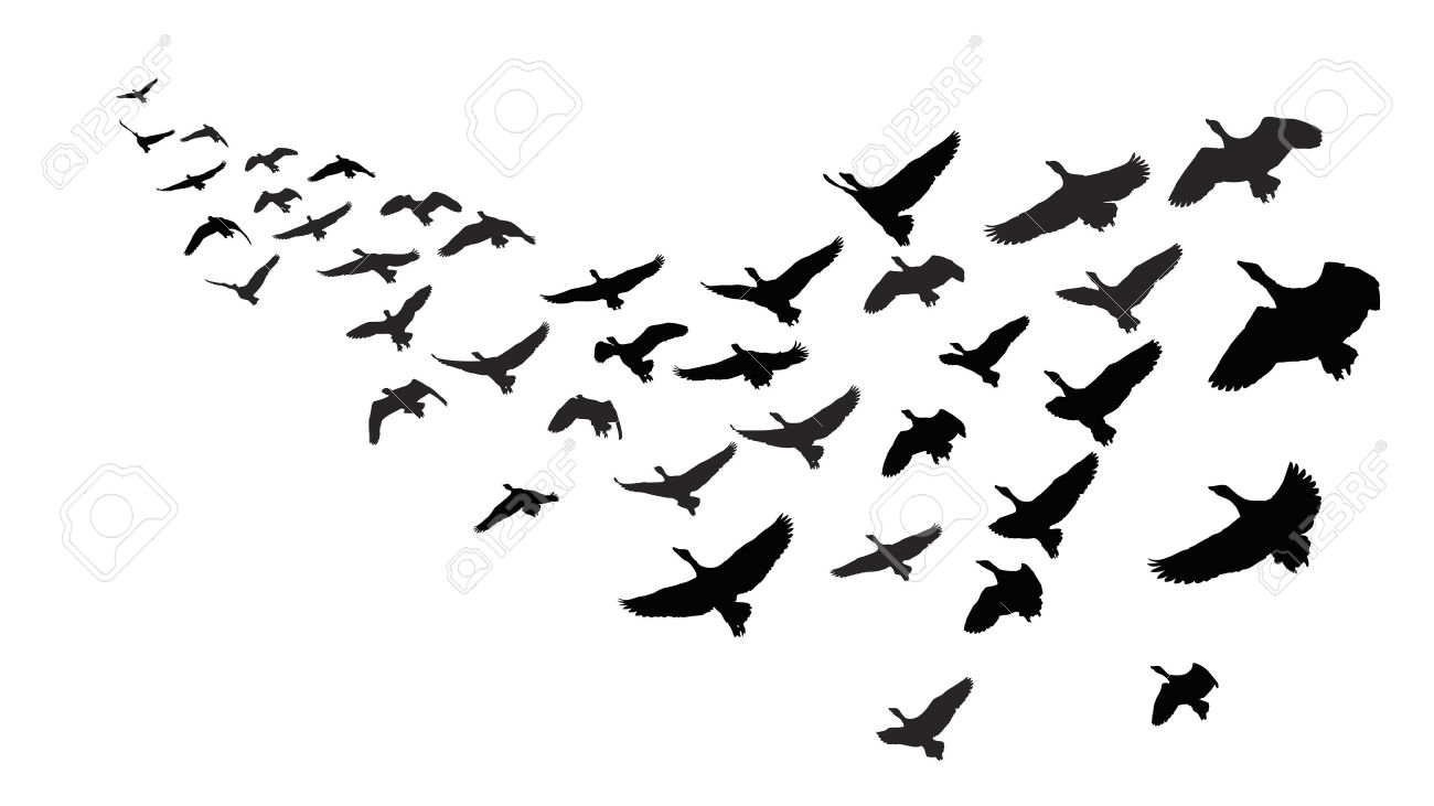 1300x731 Flock Of Birds Clipart Moving Picture