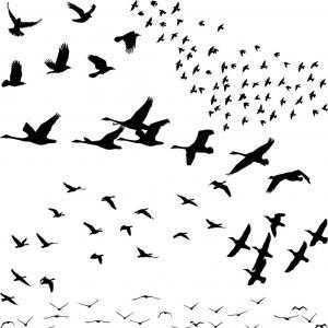 300x300 Silhouette A Flock Of Birds Vector Lazttweet