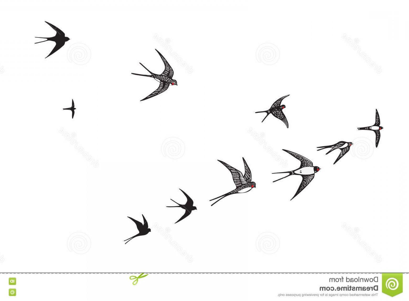 1560x1146 Stock Illustration Flock Birds Silhouette Swallow Vector