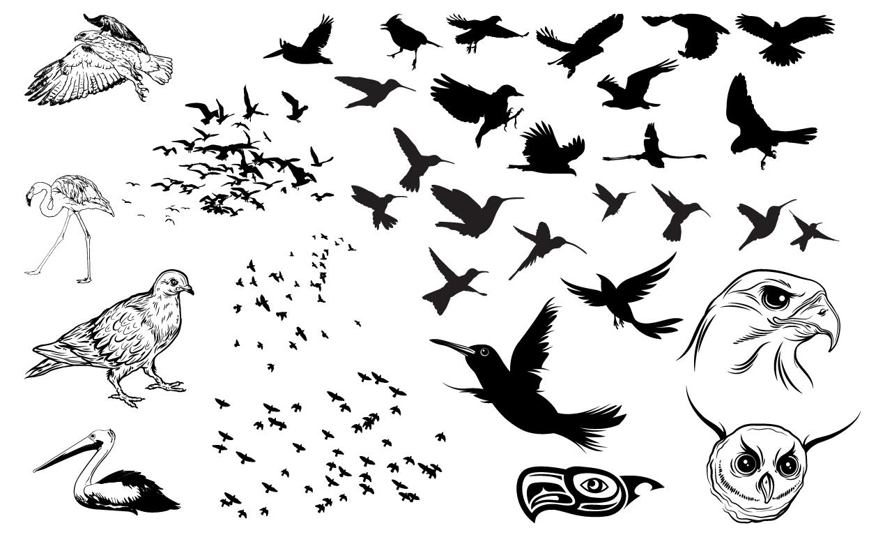 1270x770 Birds Vector Pack For Adobe Illustrator