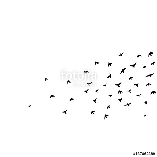 500x500 Flock Of Flying Birds Vector Illustration Stock Image And Royalty