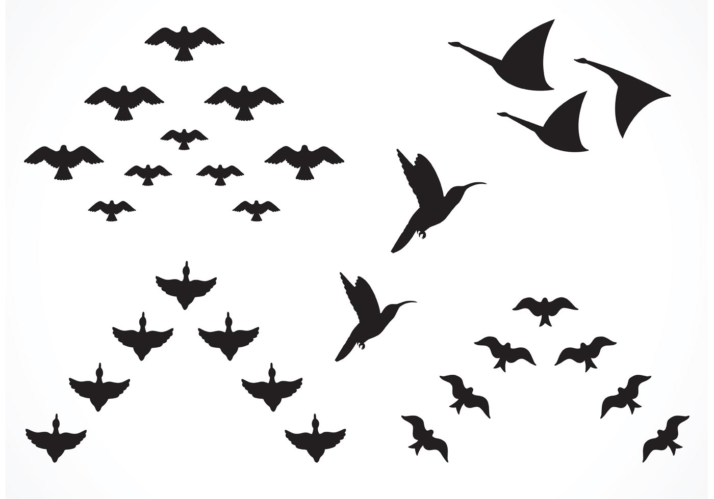 1400x980 Bird Flock Free Vector Art