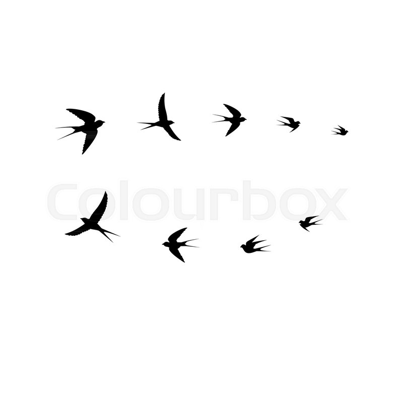 800x800 Bird Vector, Birds Flock,vector Illustration Stock Vector
