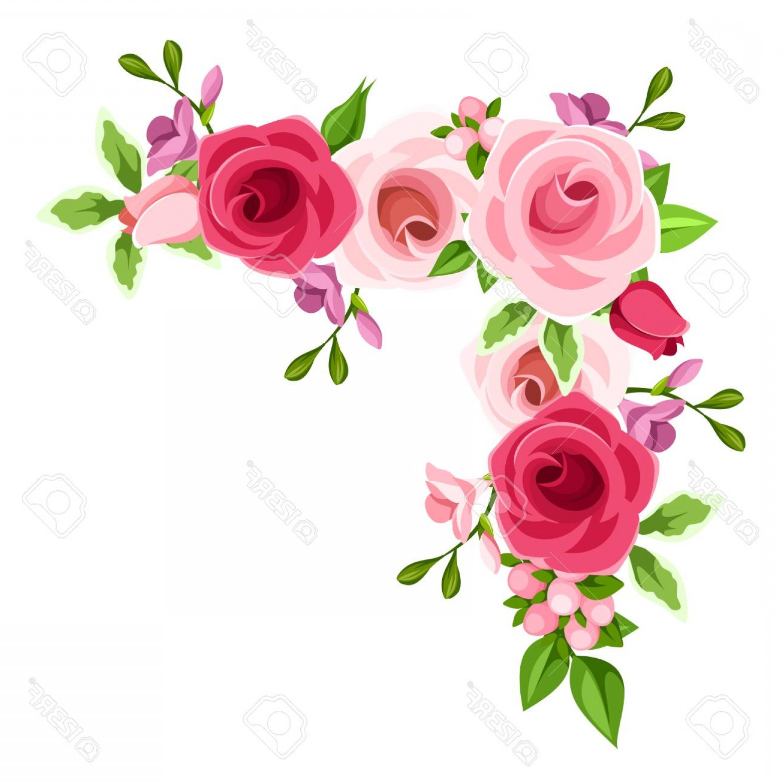 1560x1560 Pink Floral Corner Vector Arenawp