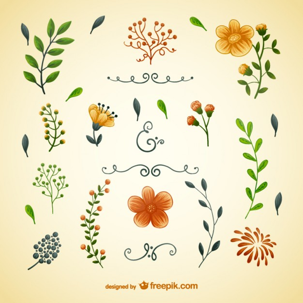 626x626 Flowers And Leaves Illustrations Vector Free Download