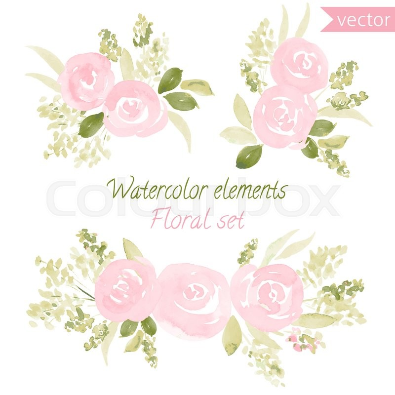 800x800 A Set Of Watercolor Roses Flowers And Leaf. Vector Collection With