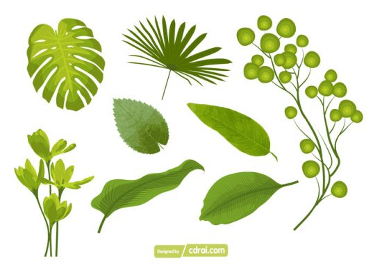 550x383 Set Of Leaf Vector Free Download Free Download