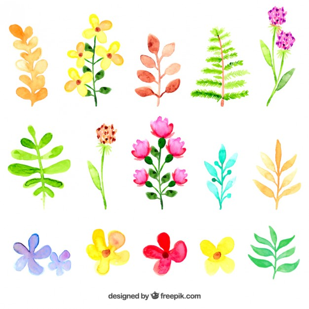 626x626 Watercolor Flowers And Leaves Vector Free Download