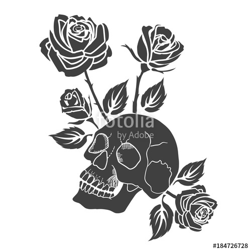 500x500 Human Skull And Roses Tattoo Vector Illustration. Stock Image And