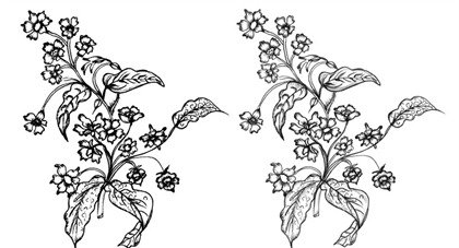 420x227 Free Sketchy Flowers Vector And Photoshop Brush Psd Files, Vectors