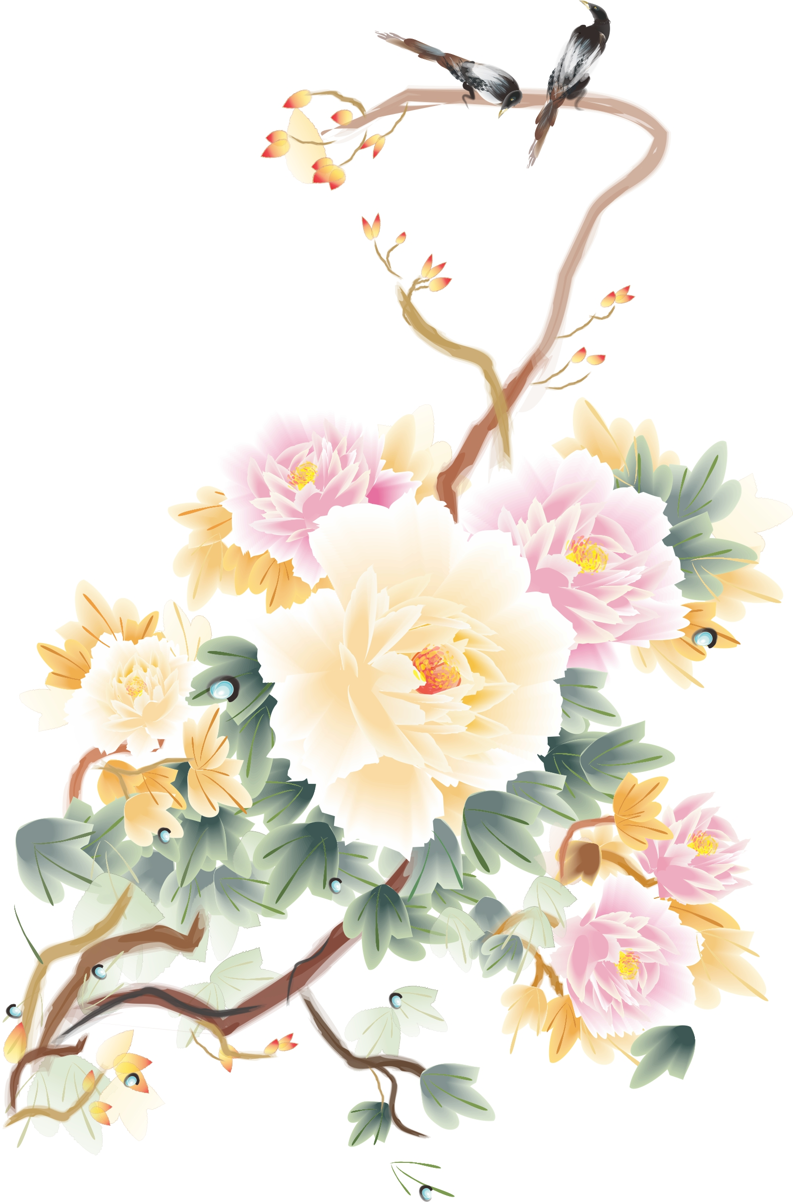 1600x2426 Peony Flowers Vector Pictures China Coreldraw Vectors Cdr Free