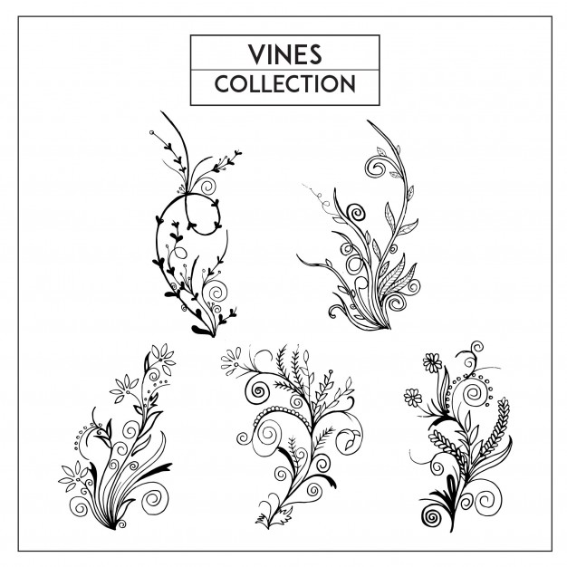 626x626 Floral Vines Vectors, Photos And Psd Files Free Download