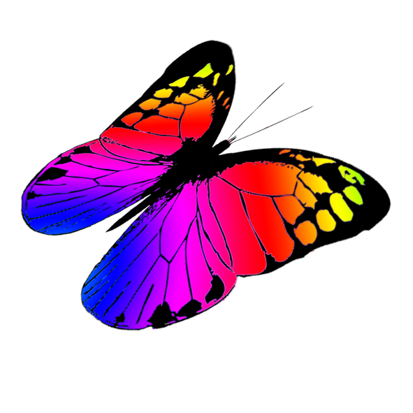 591x591 Collection Of Free Butterflies Vector Colorful. Download On Ubisafe