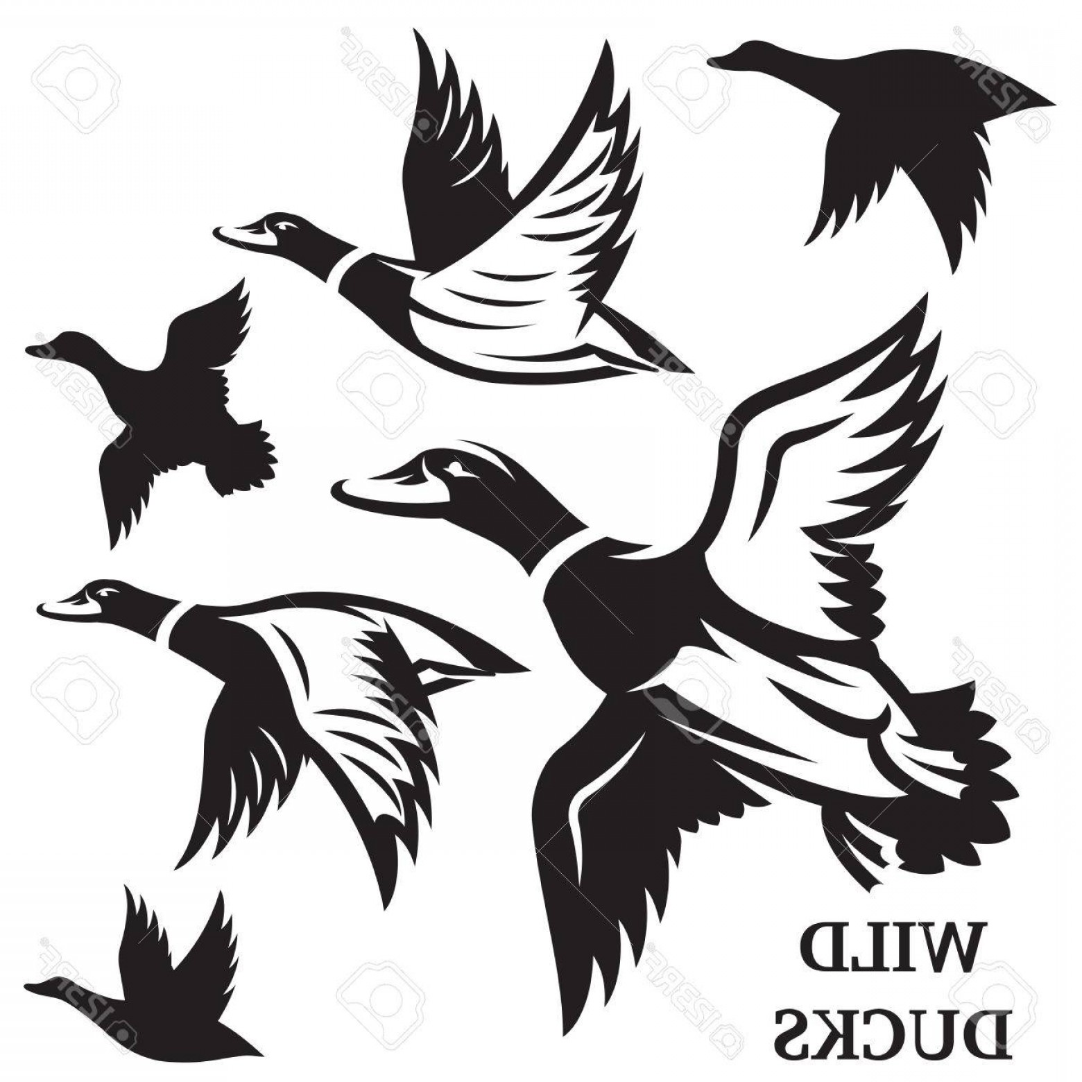 1560x1560 Flying Duck Outline Vector Createmepink