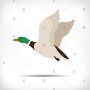 300x300 Male Mallard Duck Flying Vector Illustration Rongholland