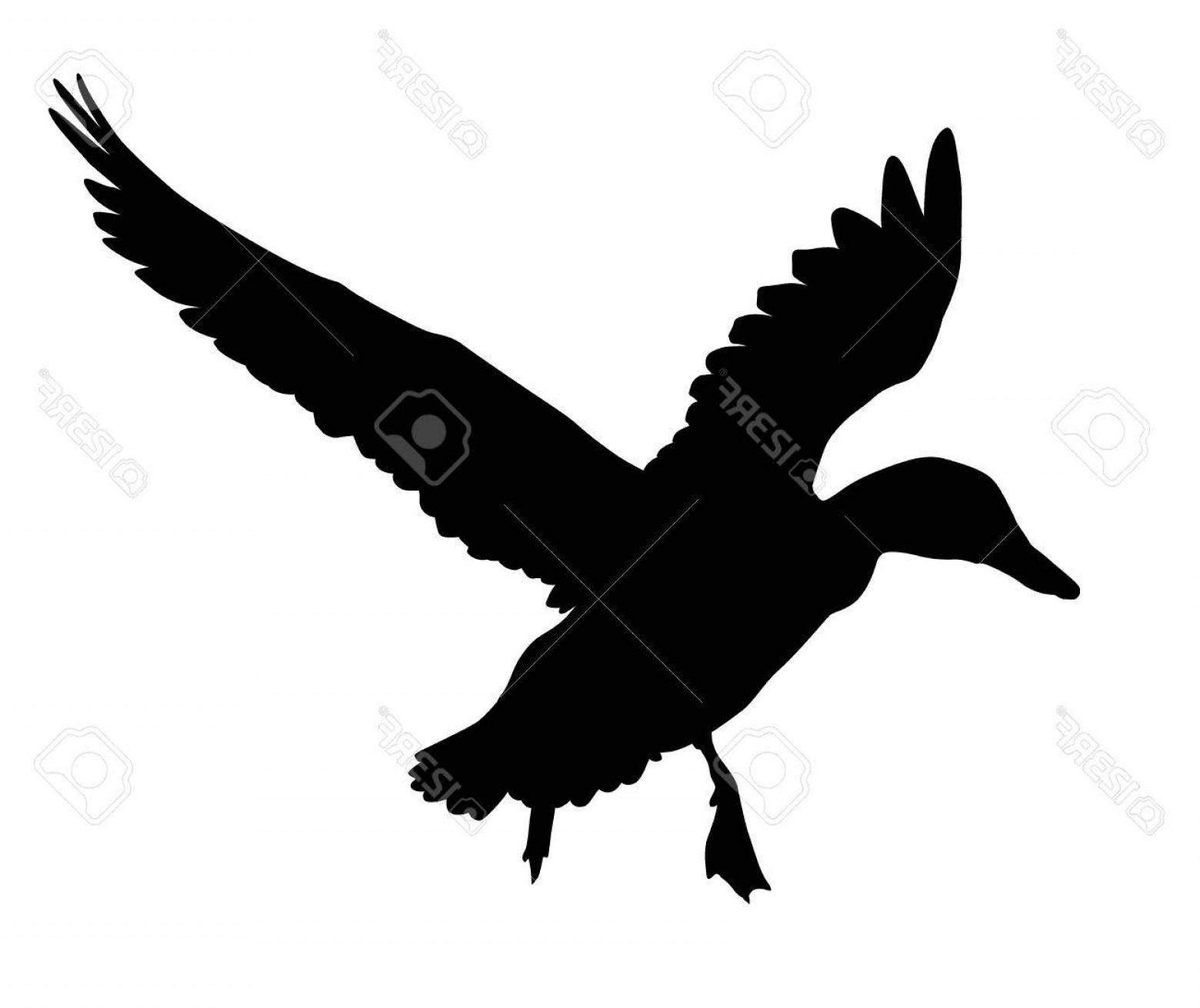 1560x1311 Photostock Vector Flying Duck Silhouette Vector Eps Createmepink