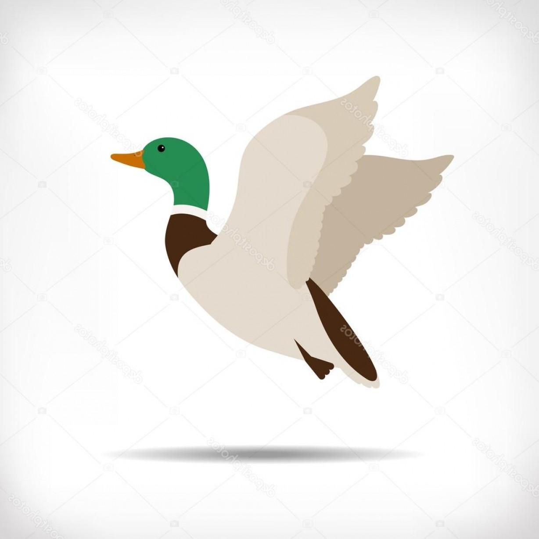 1228x1228 Stock Illustration Flying Duck Vector Mallard Duck Geekchicpro