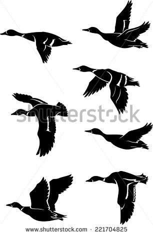 306x470 Vector Flying Duck Free Vector For Free Download About (10) Free