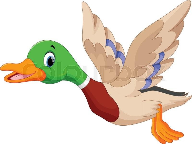 800x603 Vector Illustration Of Cartoon Flying Duck Stock Vector Colourbox
