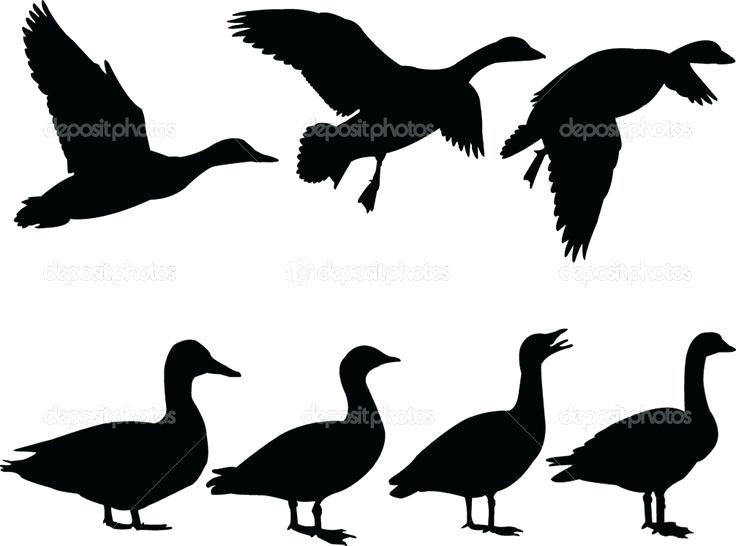 736x546 Flying Duck Silhouette Clip Art Rosenwerk Work