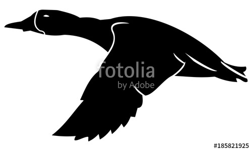 500x300 Silhouette Of Flying Ducks Stock Image And Royalty Free Vector