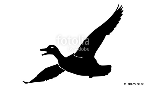 500x300 Vector Image Of Flying Duck Stock Image And Royalty Free Vector
