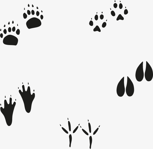 538x523 Footprints Vector, Footprint, Animal Footprints, Vector Free