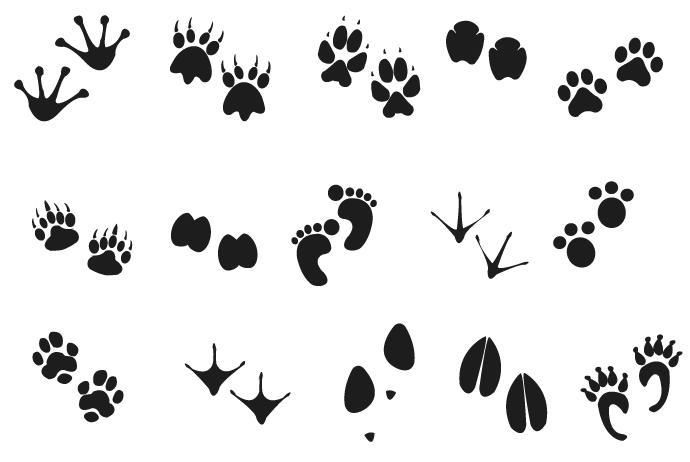 690x462 Human Animal Footprints