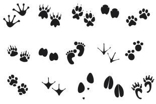 310x207 Best Free Download Footprint Vector Image Collection