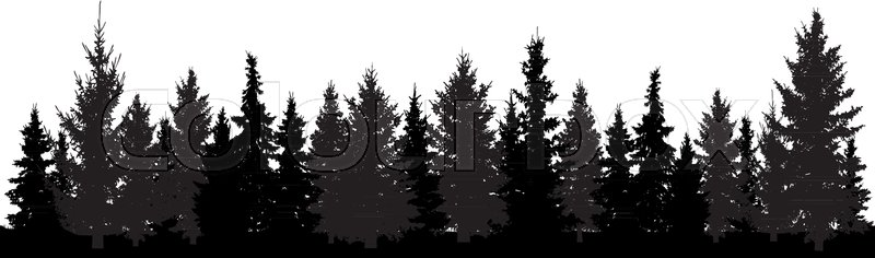 800x236 Forest Of Christmas Fir Trees Silhouette. Coniferous Spruce. Park