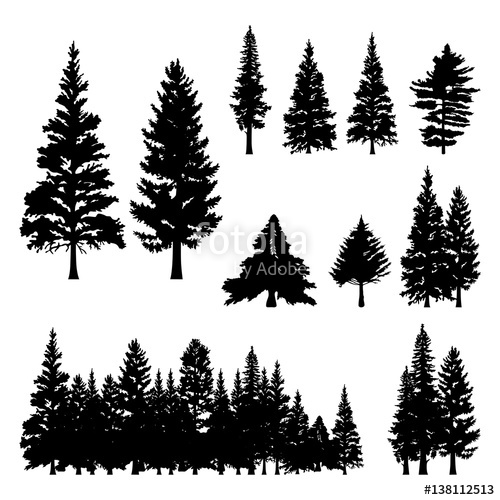 500x500 Pine Fir Forest Conifer Coniferous Tree Silhouette Stock Image