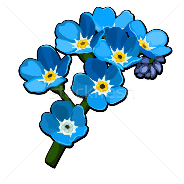 600x600 Forget Me Not Stock Vectors, Illustrations And Cliparts Stockfresh