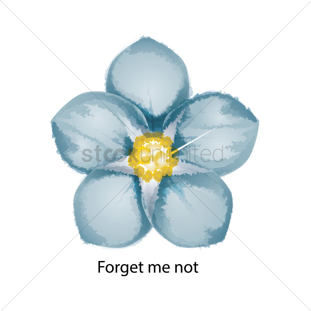 1300x1300 Forget Me Not Vector Image