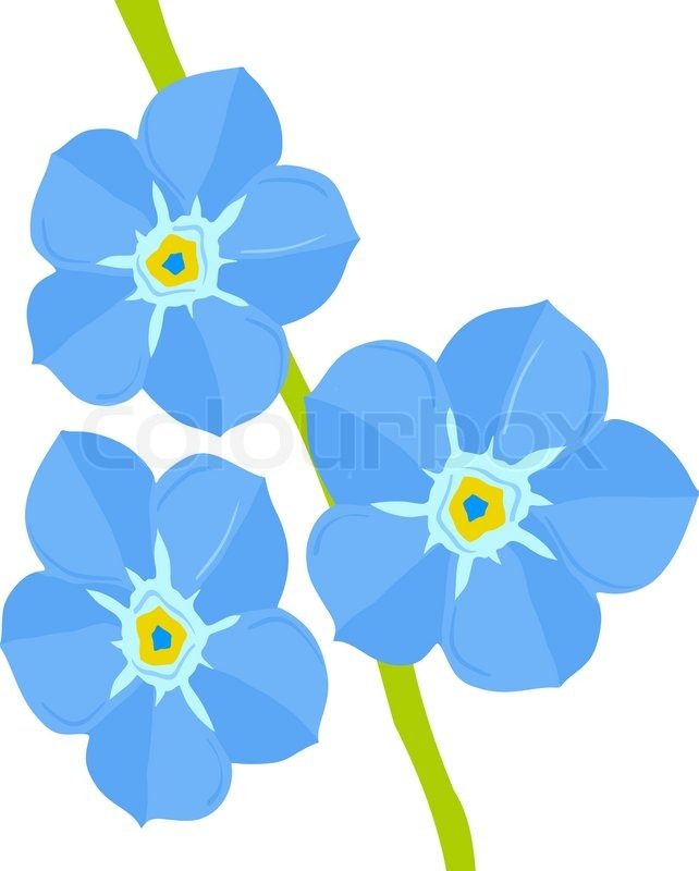642x800 Forget Me Not Flower Stock Vector Colourbox