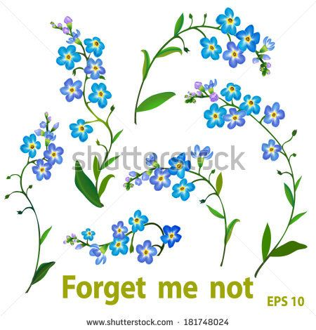 450x470 Spring Blue Flowers
