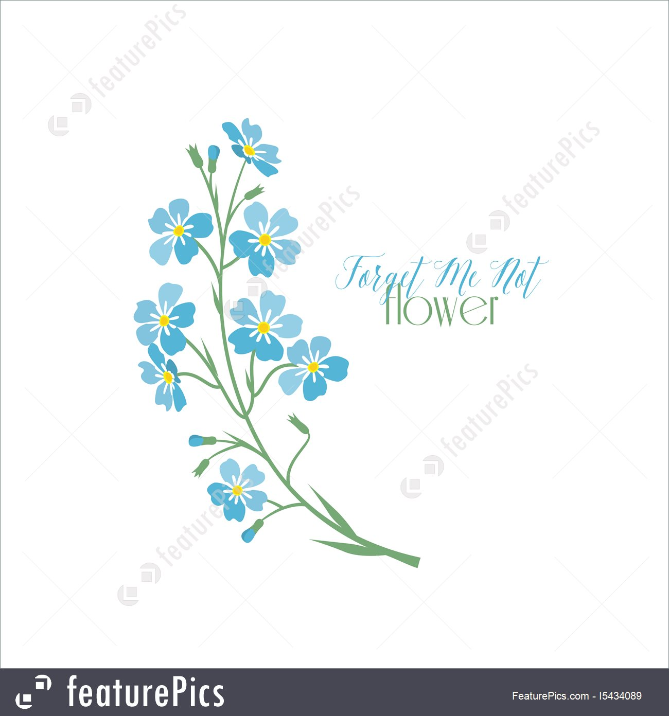 1300x1392 Vector Blue Forget Me Not Flowers Stock Illustration I5434089