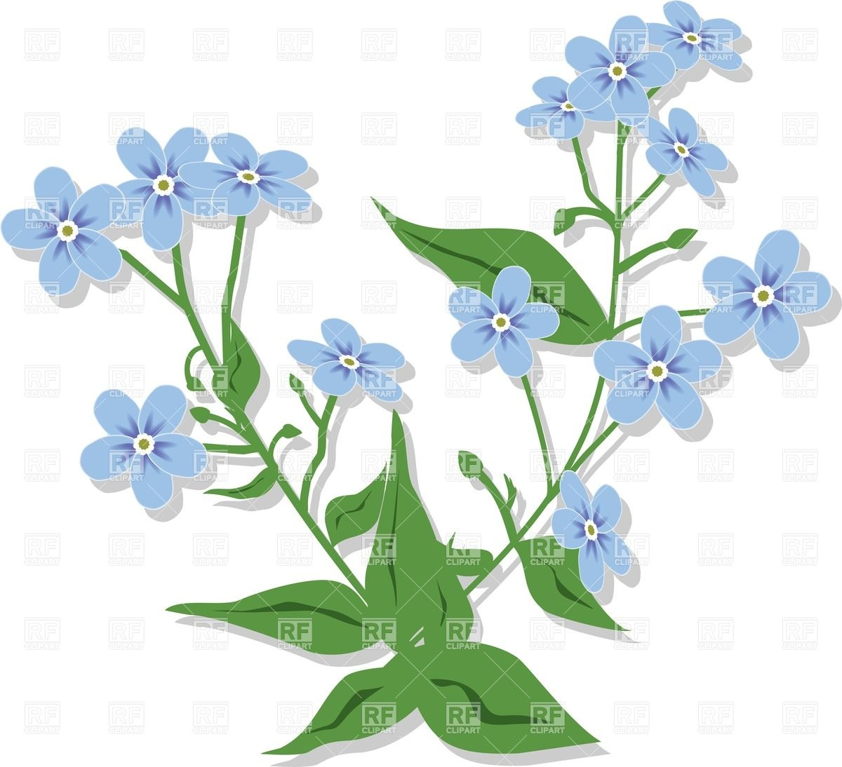 1200x1094 Bouquet From Forget Me Nots
