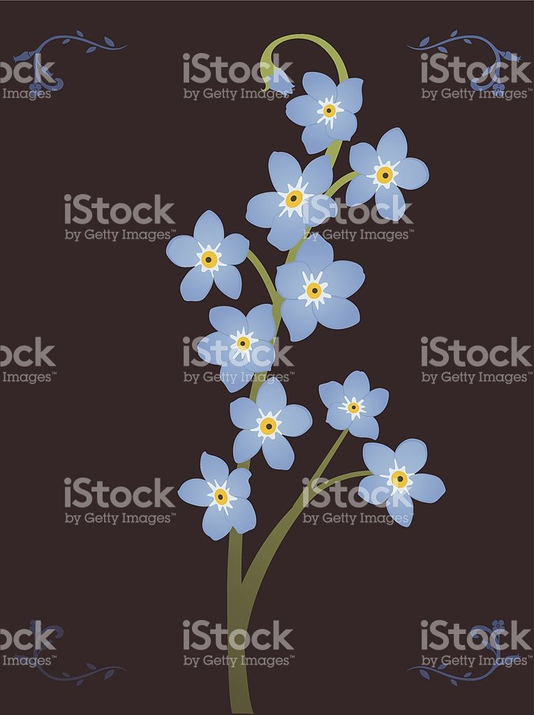 765x1024 Forget Me Not Vector Art, Forget And Royalty