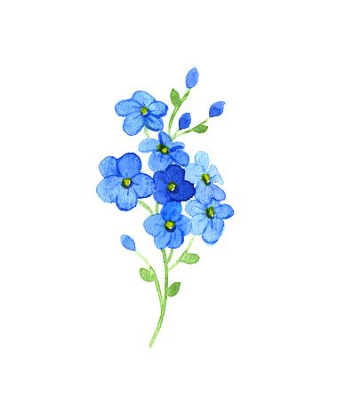 379x455 Forget Me Not Clip Art, Vector Images Amp Illustrations