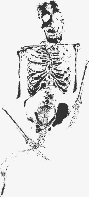 305x675 Ancient Human Fossil Bones, Human Vector, Ancient Fossils, Vector