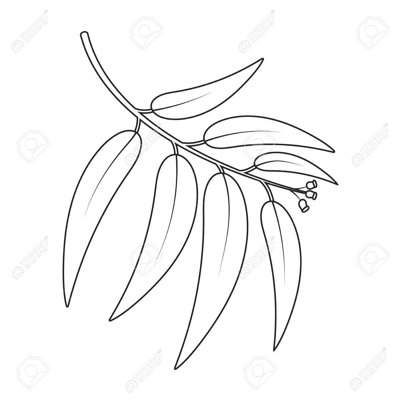 1300x1300 Collection Of Eucalyptus Clipart Black And White High
