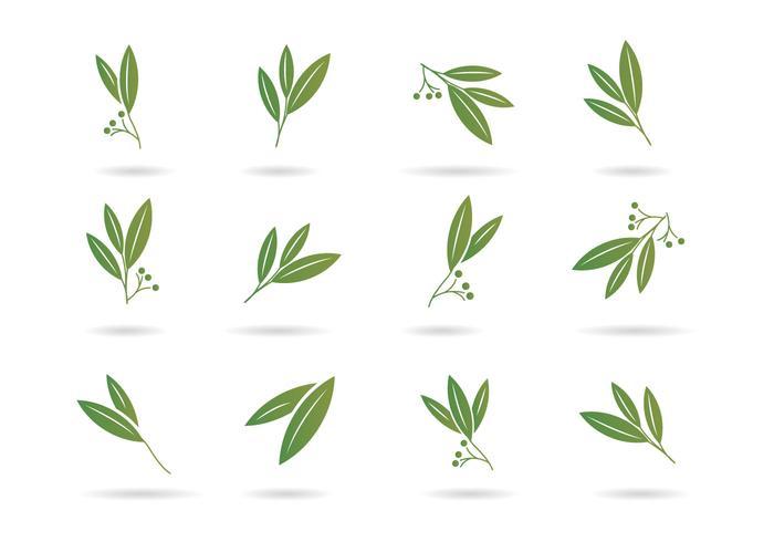 700x490 Free Eucalyptus Icons