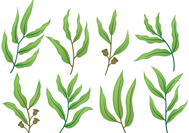 632x443 Free Eucalyptus Icons Vector Free Vector Download 369797 Cannypic