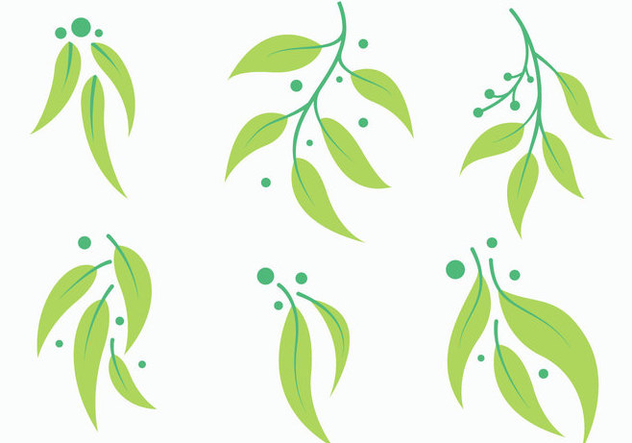 632x443 Free Eucalyptus Vector 1 Free Vector Download 374569 Cannypic