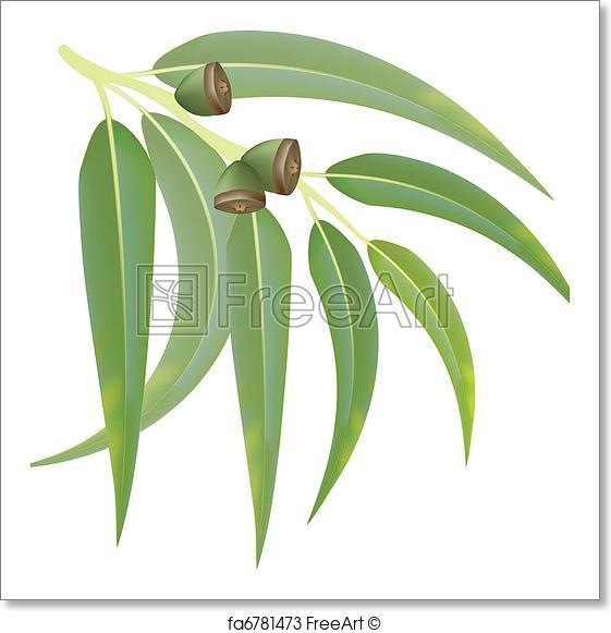 561x581 Free Art Print Of Eucalyptus Branch On White Background. Vector