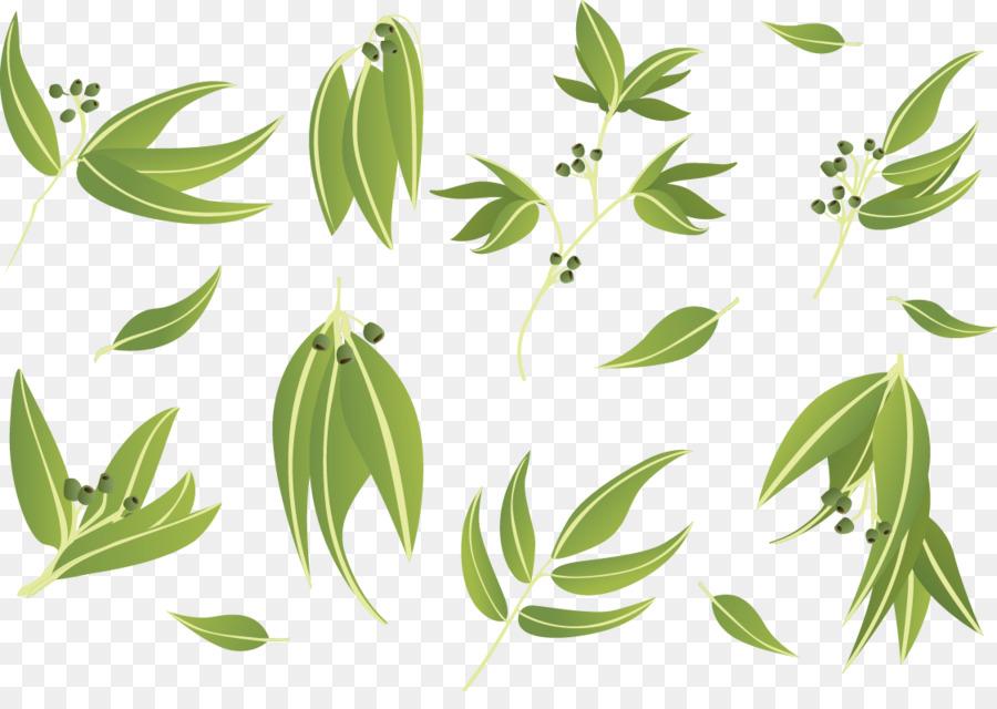 900x640 Gum Trees Leaf Euclidean Vector