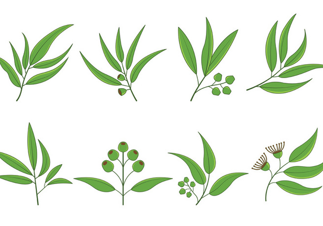 632x443 Set Of Eucalyptus Vector Free Vector Download 369737 Cannypic